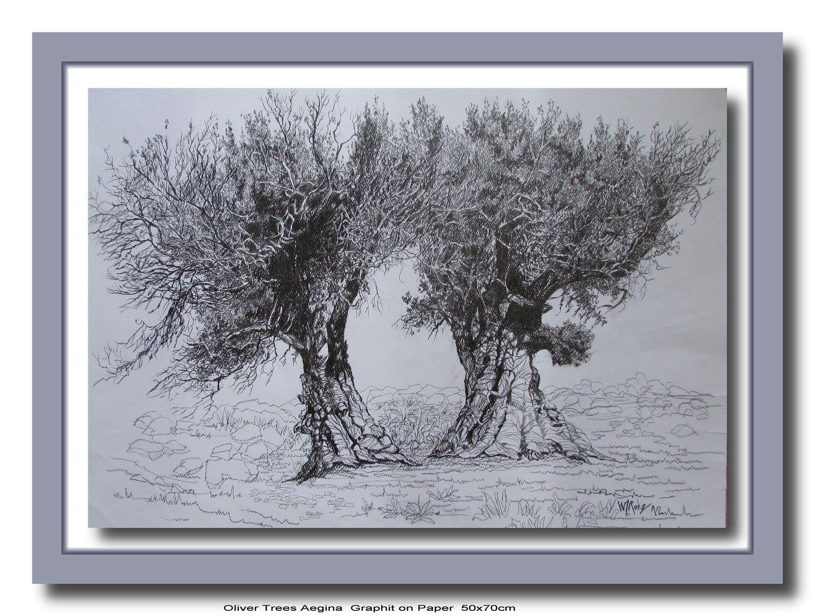 Olive Tree, Aegina